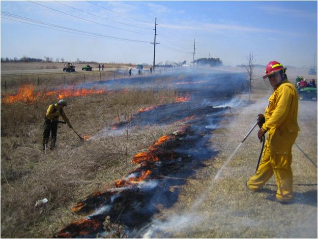 Prairie Plantings and the Burn Program
